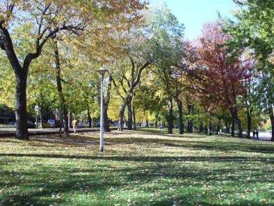 montreal-trees.jpeg